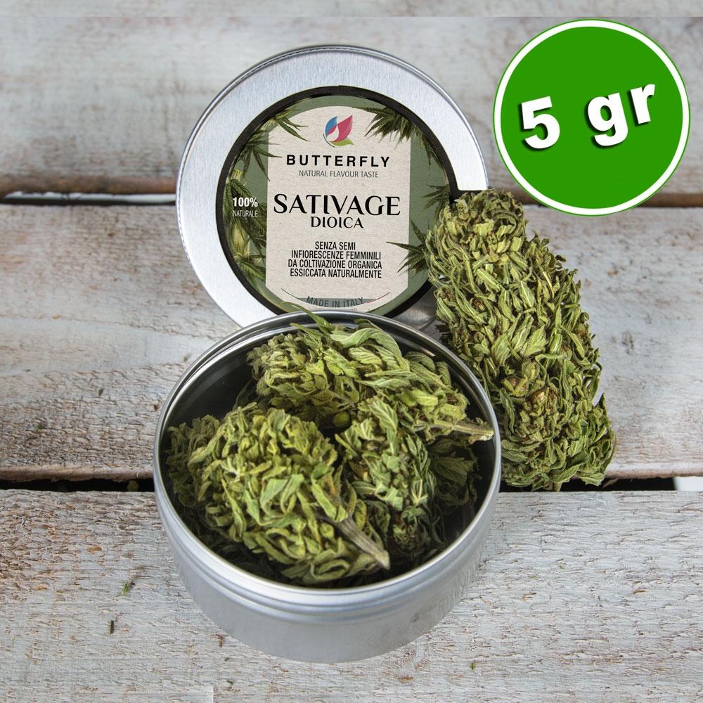 Infiorescenze_cannabis_sativage_new