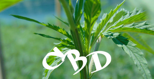 cbd come farmaco