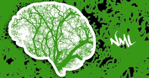 effetti cbd sul cervello e corpo