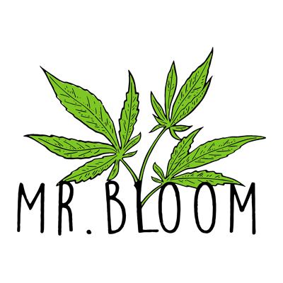 mr. bloom roma tuscolana