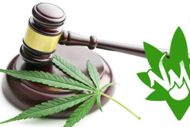 sentenza cassazione cannabis