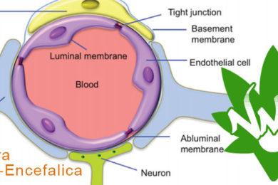 barriera emato encefalica e CBD