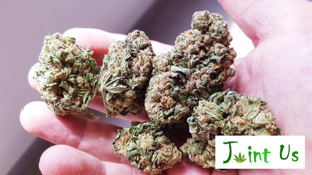 Marijuana legale Umbria: joint us, CBD di alta qualità a perugia