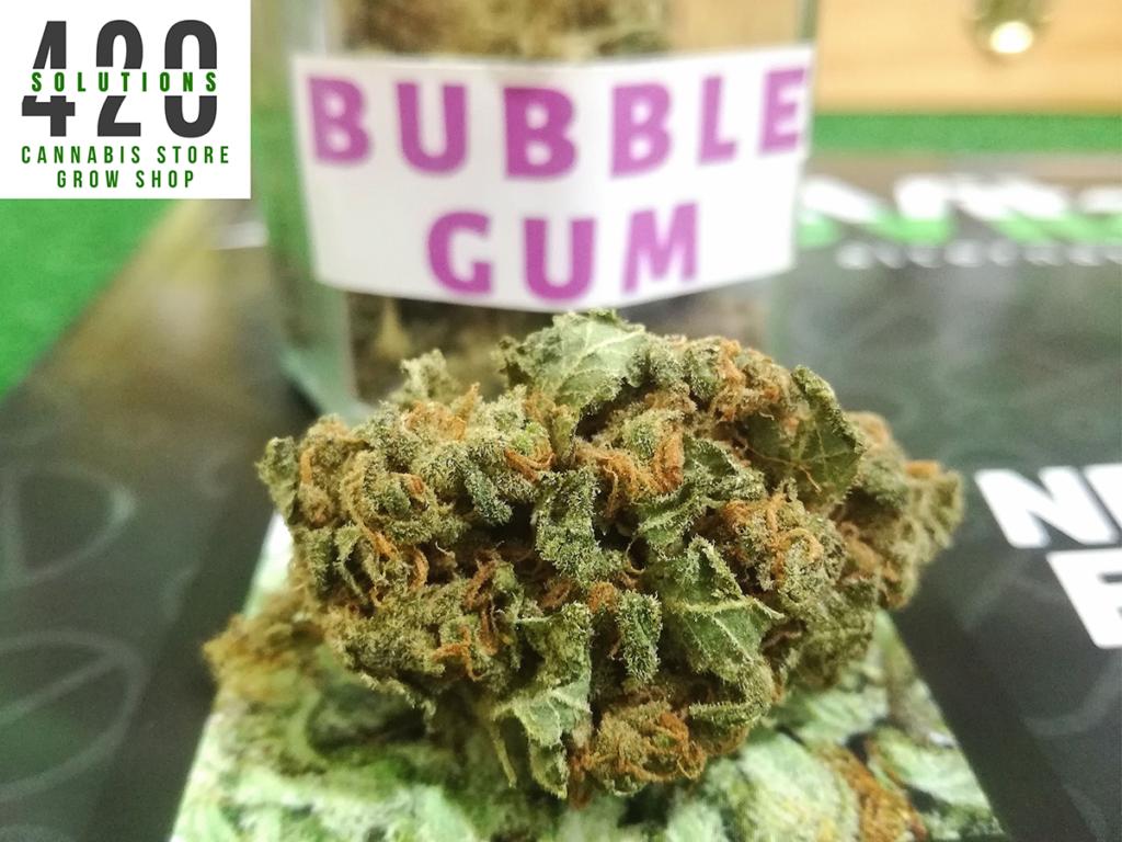Bubble gum cannabis light Portici