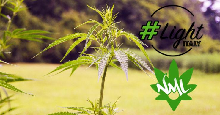 coltivare cannabis light