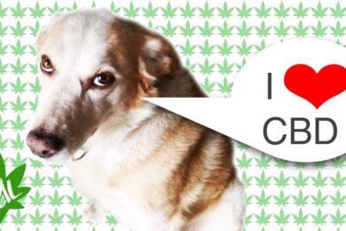 CBD per cane e gatto