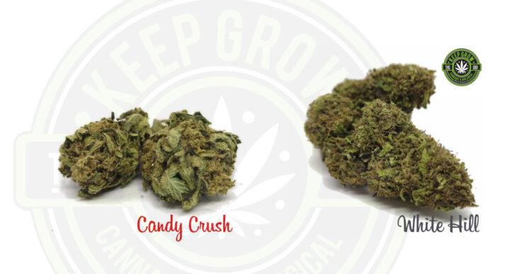 cannabis light cbd ostia